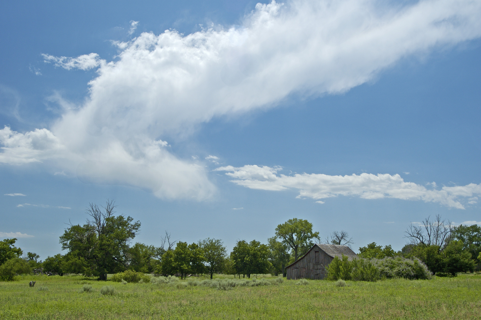 East-Texas-Land-for-Sale